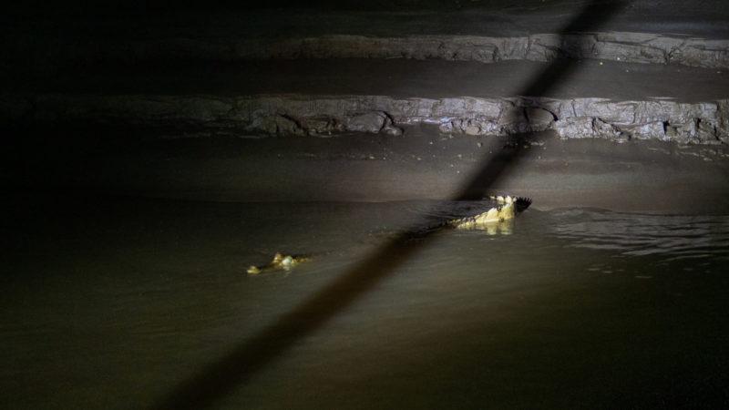 Caimans Puerto Maldonado