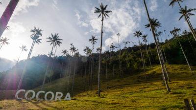 Vallée de Corcora Salento Colombie