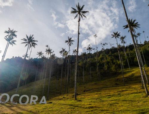 Salento, au coeur de la région du café colombien