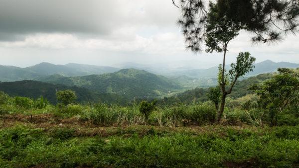 Los Pinos Minca Colombie