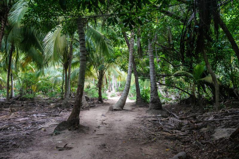 Forêt Tayrona Colombie