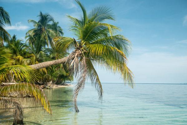 San blas palmier plage